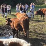 Trabalhar com produção de leite ou com gado é uma das possibilidades da profissão